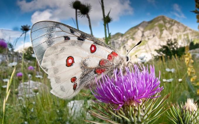 Thiên nhiên muôn sắc dưới ống kính nhiếp ảnh gia