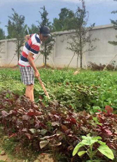 Hoài Linh chăm vườn rau nhỏ trong khuôn viên nhà thờ tổ của anh ở quận 9, TP HCM.