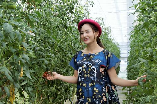 Lan Phương đến thăm công ty trồng rau quả bằng phương pháp thủy canh. Lan hương thích thú với những trái cà chua căng mọng, sạch bóng và hoàn toàn sạch sẽ