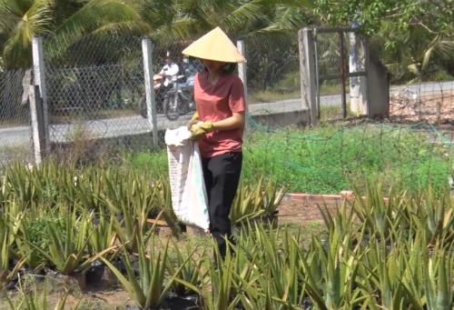 Ngoài giờ học, Kim Hoàng thường phụ giúp công việc gia đình.