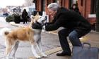 Những bộ phim nổi bật về loài chó