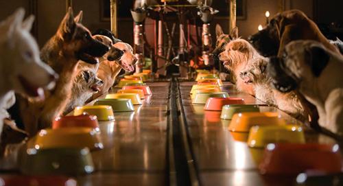 Hàng chục con chó vô chủ được chị em Andi - Bruce đưa về nuôi trong khách sạn bỏ hoang.