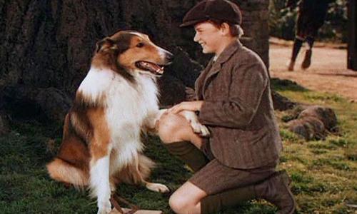 Chó Lassie thường xuyên chờ cậu chủ tan học trước cổng trường.