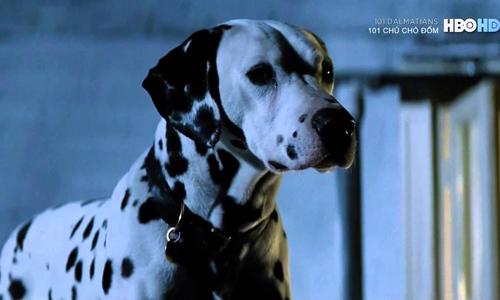 Chó đực Pongo trong 101 Dalmatians.