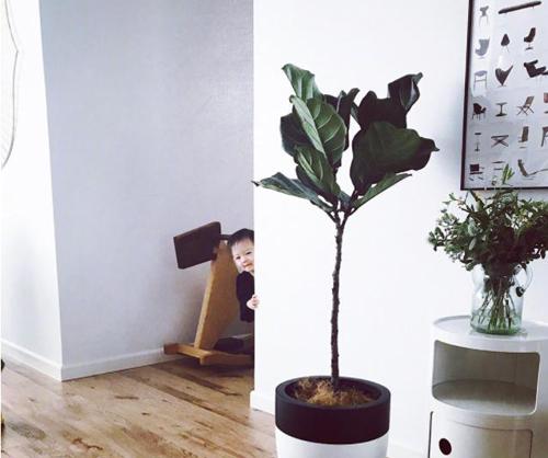Tường nhà màu trắng hầu như không được trang trí gì ngoài bức tranh nhỏ, để làm tôn nét tinh tế của nội thất.
