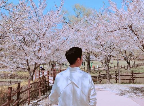 Son Ye Jin ngắm hoa anh đào cùngJung Hae In - 2