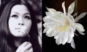 'Quỳnh hương' - tình nhỏ thơm lâu của Trịnh Công Sơn