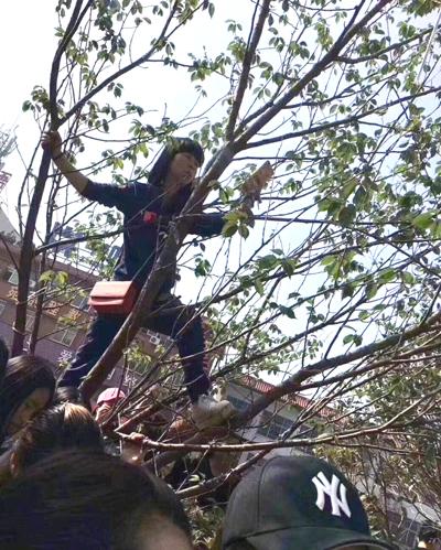 Lâm Chí Dĩnh hủy sự kiện vì fan leo cây, tràn xuống đường - 3