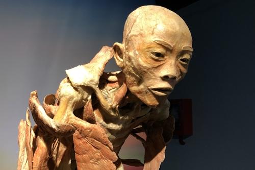Một mẫu vật được trưng bày ở gian đầu của triển lãm.