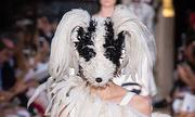 Người mẫu đội mặt nạ thú catwalk ở Tuần thời trang Paris