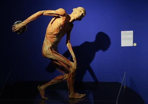 Một mẫu vật được tạo dáng theo tác phẩm điêu khắc nổi tiếng của Hy Lạp - Người ném đĩa (The Discobolus).