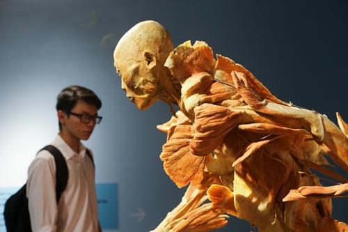 Hình ảnh trong triển lãm cơ thể người tại TP HCM. Ảnh: Quỳnh Trần.