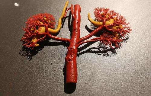 Các bộ phận tuần hoàn như tim, mạch máu... được phun sơn tỉ mỉ.