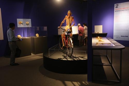 Ghép:Bên trong triển lãm cơ thể người ở TP HCM đang gây tranh cãi - 3