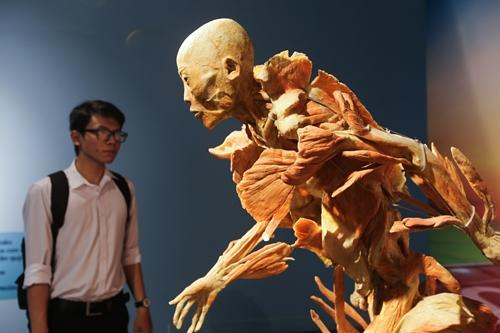 Một mẫu vật trưng bày tại triển lãm cơ thể người ở Nhà văn hóa Thanh niên TP HCM. Ảnh: Quỳnh Trần.