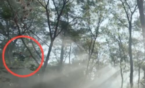 Máy bay không người lái xuất hiện trong cảnh quay nhà vua cùng tùy tùng đi săn trong rừng.