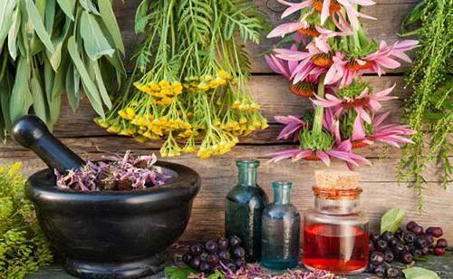 Israel là đất nước của nhiều loại thảo dược quý trong điều chế mỹ phẩm.