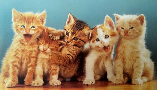 Walter Chandoha từng cho rằng tính cách của loài mèo là chủ đề thú vị cho những bức ảnh. Trong cuốn sách Walter Chandoha: The Cat Photographer năm 2015, ông chia sẻ: Biểu cảm của loài mèo rất tự nhiên. Chúng biến hoá trong nhiều tình huống.