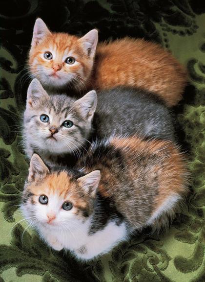 Thế giới mèo sinh động qua ống kính nhiếp ảnh gia Mỹ - 10