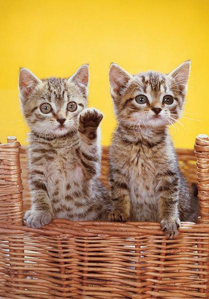 Cho tới khi qua đời, ông chụp khoảng 90.000 tấm ảnh mèo, phần lớn đều được yêu thích và lan truyền rộng rãi trên mạng xã hội.