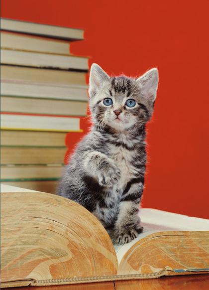 Thế giới mèo sinh động qua ống kính nhiếp ảnh gia Mỹ - 8