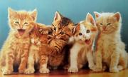 Thế giới mèo sinh động qua ống kính nhiếp ảnh gia Mỹ
