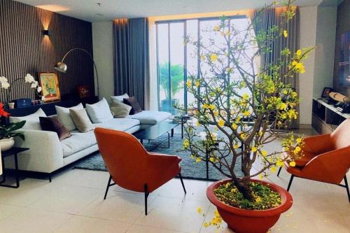 Á hậu, MC Thúy Vân mua chậu mai lớn để trang trí cho penthouse400 mét vuông ở Quận 2.