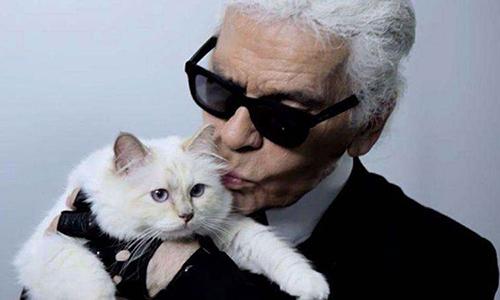 Karl Lagerfeld và mèo cưng.