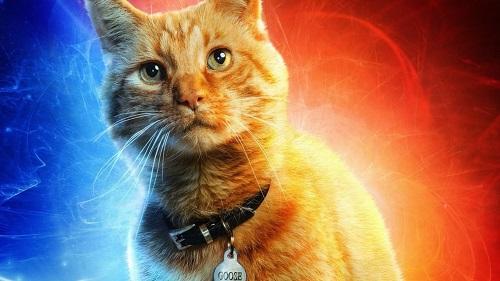 Theo Collider, có đến bốn chú mèo thể hiện nhân vật Goose trong phim.