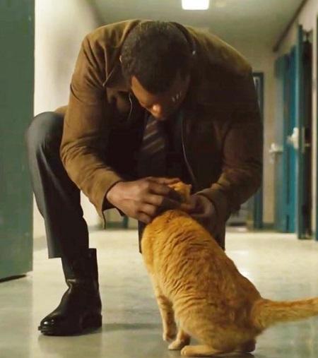 Một cảnh của Samuel L. Jackson với mèo.