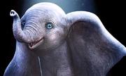 'Dumbo' - phim nhiều kỹ xảo, nội dung đơn giản về chú voi bay