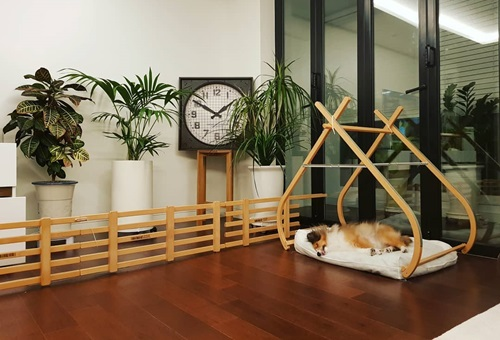 Một góc phòng khách của tài tử. Anh thiết kế nhà gỗ cách điệu cho cún cưng, trang trí không gian bằng những chậu cây cảnh và đồng hồ lớn.Tôi không đặt tivi ở phòng khách vì muốn người thân, bạn bè có cơ hội giao lưu, trò chuyện nhiều hơn là dán mắt vào tivi, anh nói.