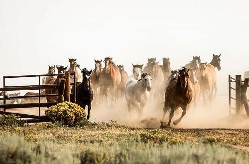 Khu nghỉ dưỡng có chuồng ngựa với hàng chục con phục vụ du khách.