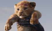 'Vua sư tử' 2019 - 'bữa tiệc' thị giác về thế giới loài vật