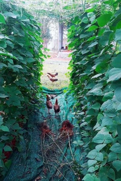 Một góc vườn nhà cô.