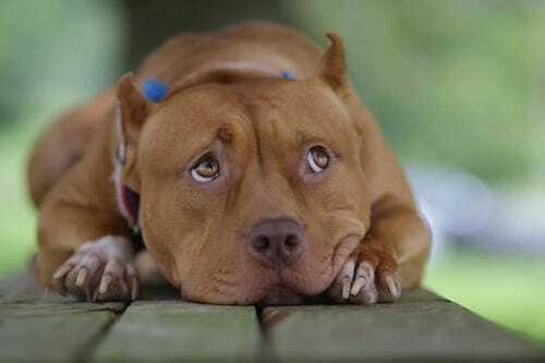 Sayuri - cô chó nổi tiếng nhờ đóng phim cùng Brad Pitt - 1