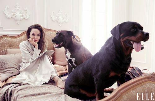 Angelina Jolie cho biết Maddox - con trai cả là người chọn mua hai chú chó thuộc giống Rottweiler và Pitbull của gia đình. Ảnh: Elle.