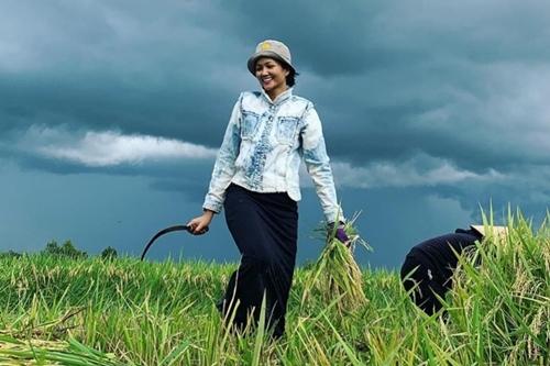 HHen Niê gặt lúa ở buôn làng. Ảnh: Instagram.