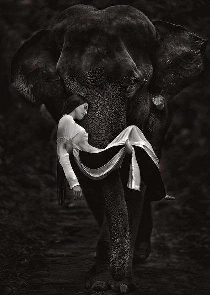 Trương Thị May được chú voi nâng lên trong một tấm hình.