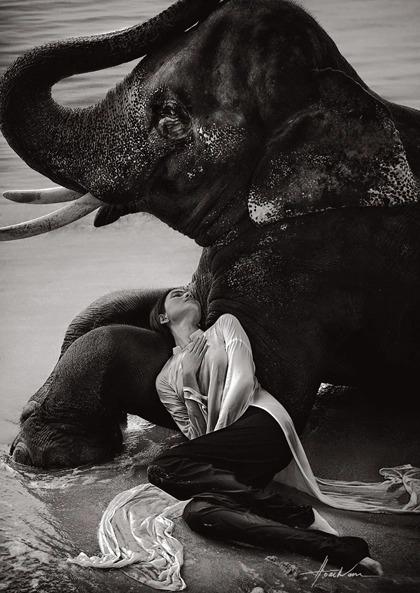 Người đẹp Trương Thị May cho biết bạn diễn voi rất hợp tác trong từng khung hình.