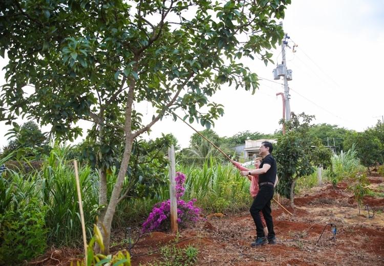 Khi về thăm vườn, anh tranh thủ thăm các trang trại của người dân xung quanh để học cách chăm sóc cây.