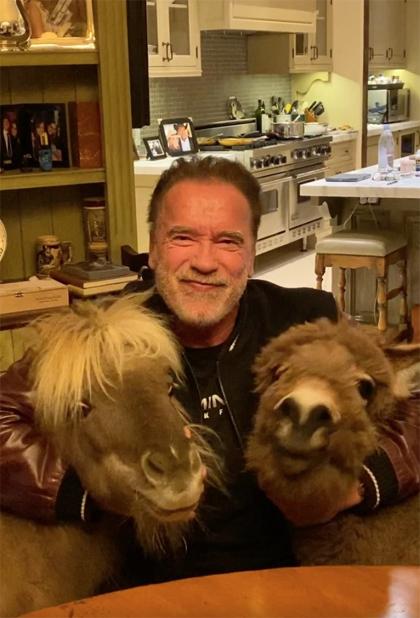 Tài t? Arnold Schwarzenegger ? nhà ch?i cùng thú c?ng là chú chú ng?a nh?. ?ng vi?t: ? nhà nhi?u nh?t có th?. L?ng nghe chuyên gia, kh?ng ho?ng lo?n. Chúng ta s? cùng nhau v??t qua.