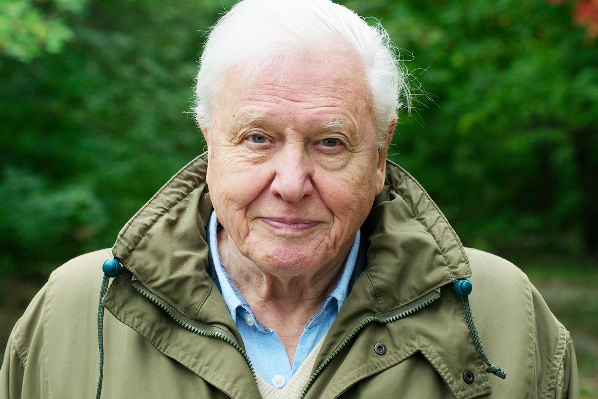 Nhà tự nhiên học người Anh - David Attenborough sinh năm 1926, đam mê nghiên cứu hóa thạch, đá, sinh vật từ nhỏ. Ngoài là nhà tự nhiên học, ông học thêm về nhân học, am hiểu lịch sử thế giới. Ảnh: Netflix.