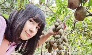 Vườn cây 3.000 m2 của Việt Trinh