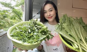 Diệp Bảo Ngọc thu hoạch rau ở sân thượng